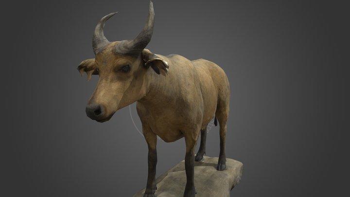 NSMT-M32126_ African Buffalo_アフリカスイギュウ_Taxidermy 3D Model