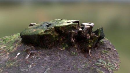 pieniek_01 (stump_01) 3D Model