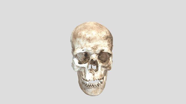 Kranium från stenålderskvinna 3D Model