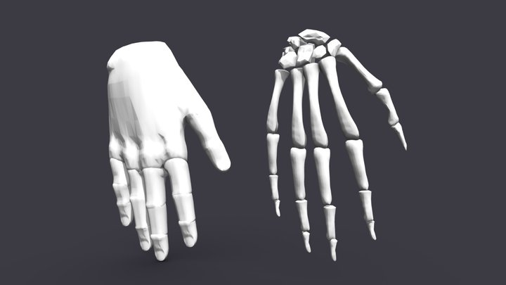 Hand Skeleton&Skin 3D Model