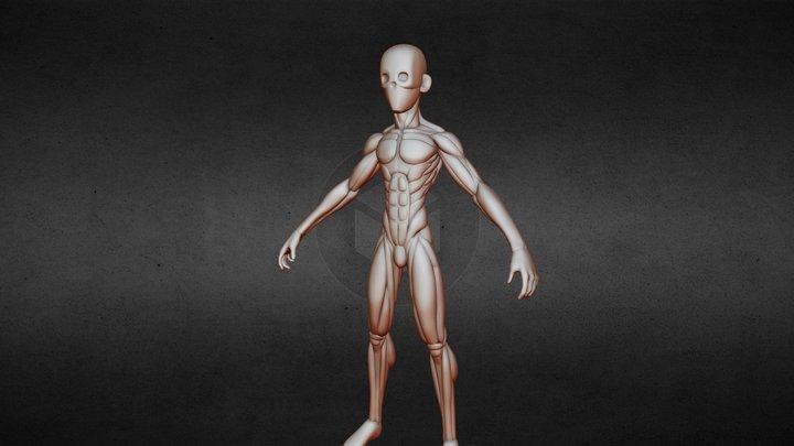 Stylized Male Anatomy 3D Model