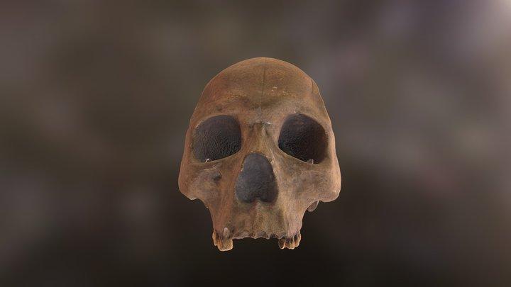 sapiens-2nd 3D Model