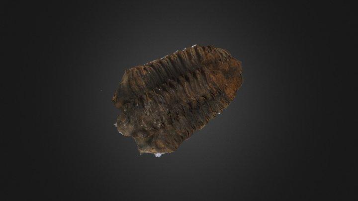 Trilobite 3D Model