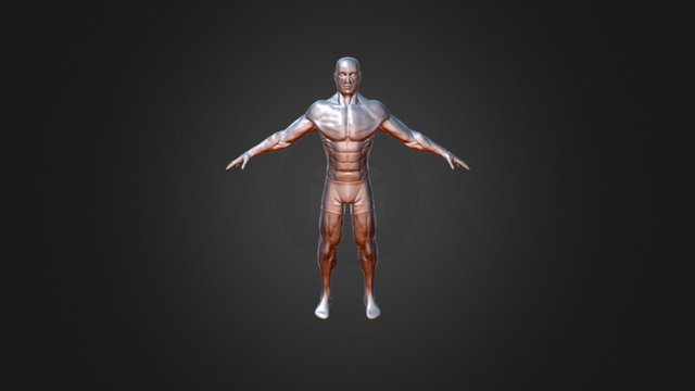 Body Sketch 03 3D Model