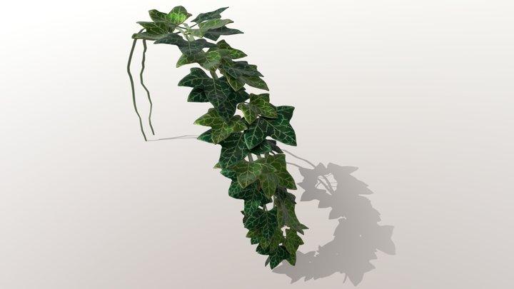 Ivy Practice 3D Model