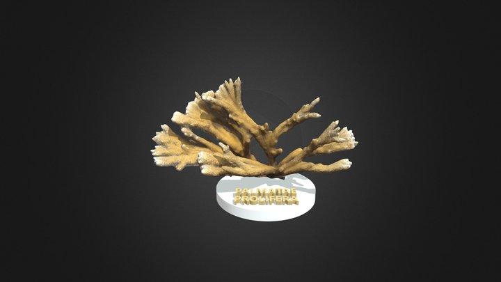 Palmata Prolifera 3D Model