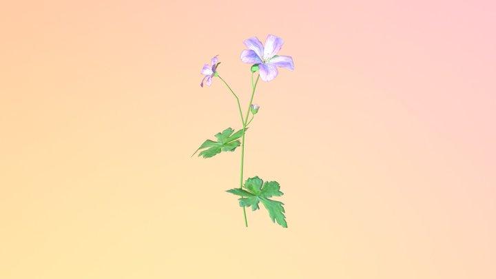 Wild Geranium (Geranium maculatum) 3D Model
