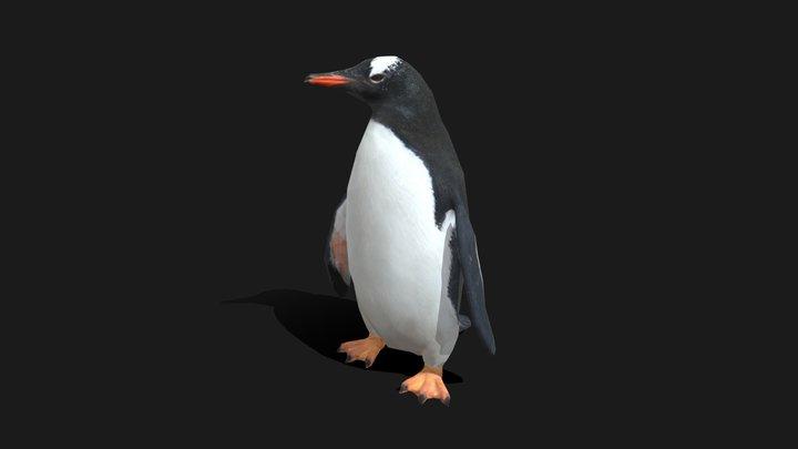 Low Poly Gentoo Penguin 3D Model