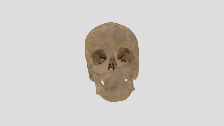 Human skull SU39 from CT scan 3D Model