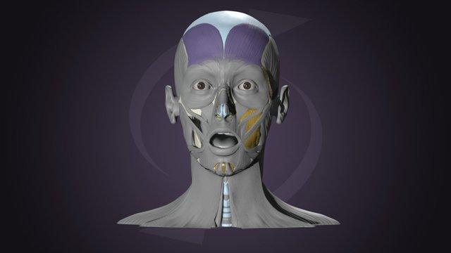 Facial Expression - Surprise 3D Model
