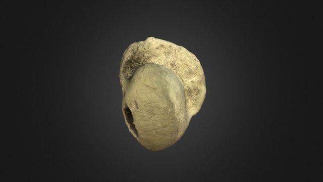 Bellerophon fossil 3D Model