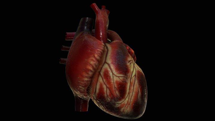 Anatomical Human Heart 3D Model
