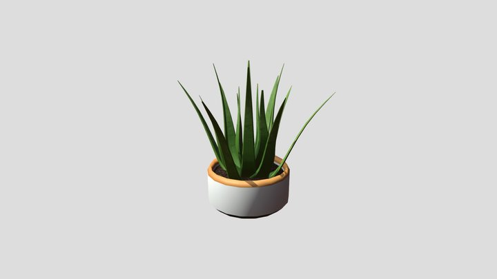 Aloe Plant Potted 3D Model