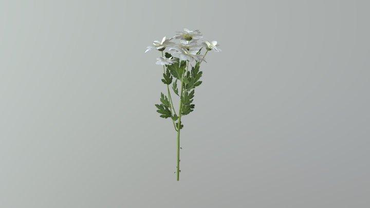 Chrysanthemum Mod 3D Model