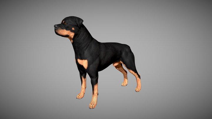 Rottweiler 3D Model
