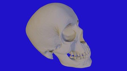 Skull - Scull Geant Fix02 3D Model