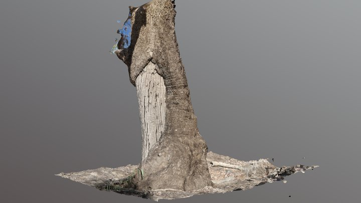 Scarred Tree 3D Model