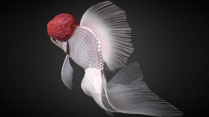 Redcap Oranda goldfish 3D Model