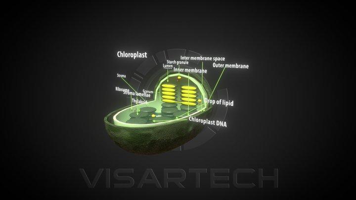 Chloroplast 3D Model