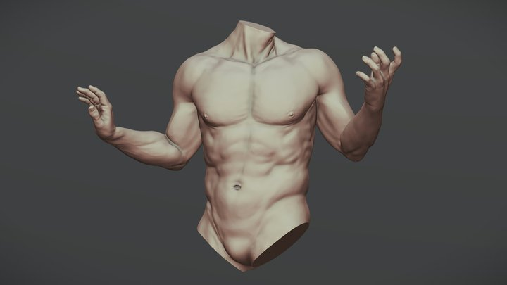 Torso With Arms 1 3D Model