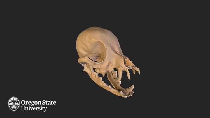 Chihuahua Skull 3D Model