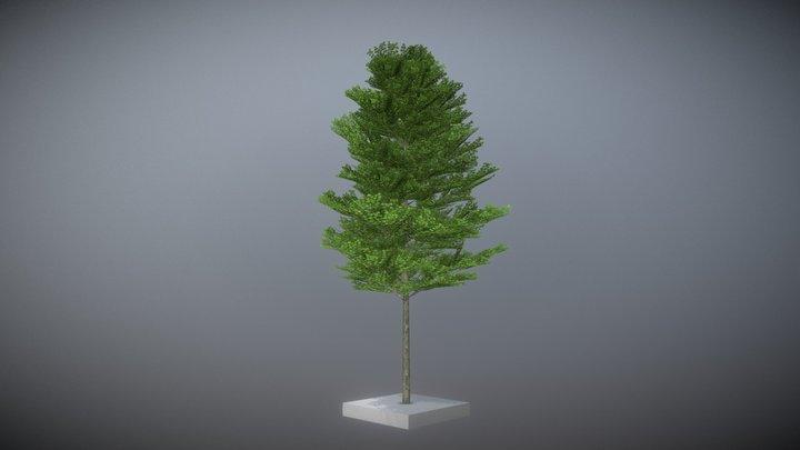Platane 12m Summer 3D Model