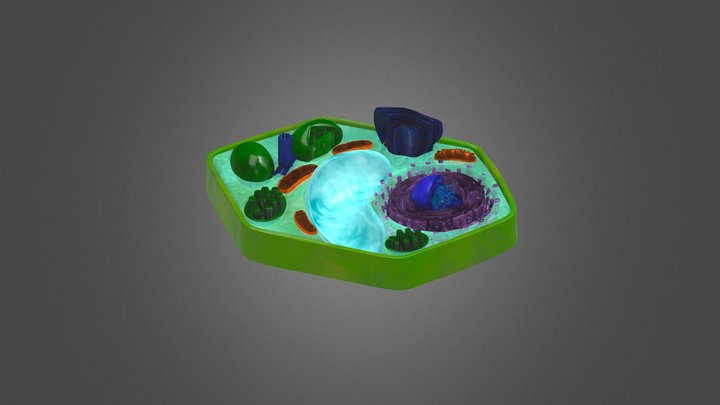 Plant Cell Organelles 3D Model