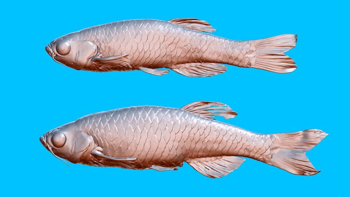Zebrafish_female &male 3D Model
