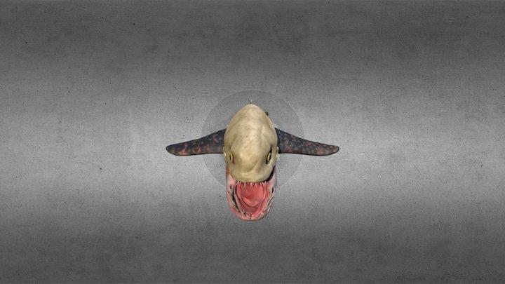 Shark Ray 3D Model