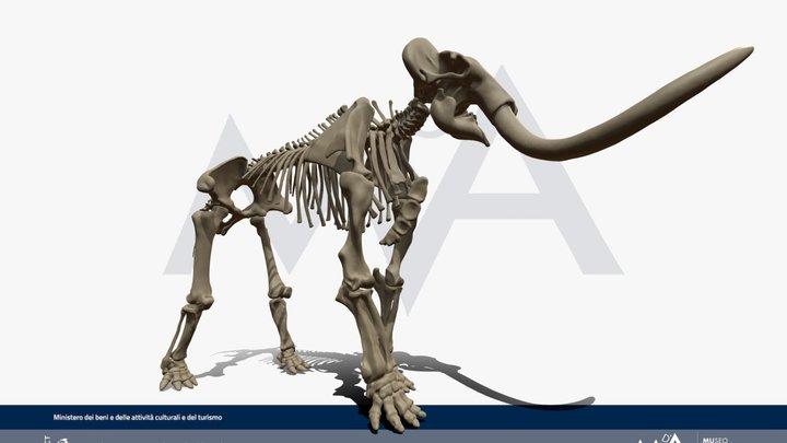 """Mammuthus meridionalis """"vestinus"""" 3D Model"""