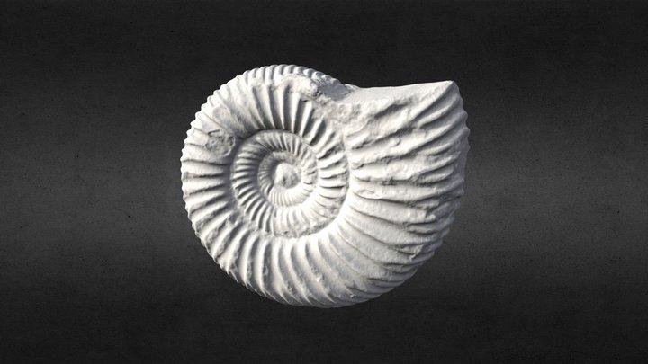 Nautilus Fossil (3D Printable) 3D Model