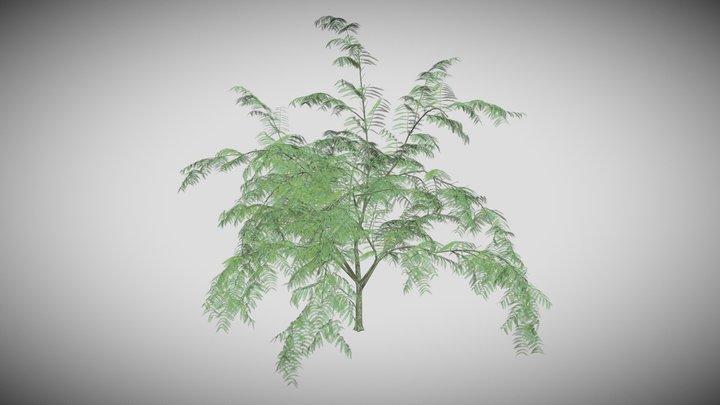 Mimosa Tree 3D Model