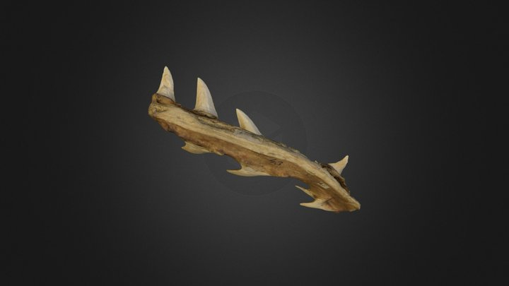 Woodwardian Collection B-17-27: shark jaw 3D Model