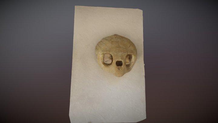 Tartaruga Skull 3D Model