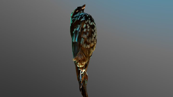 Beryl-spangled tanager: photogrammetry + pbr 3D Model