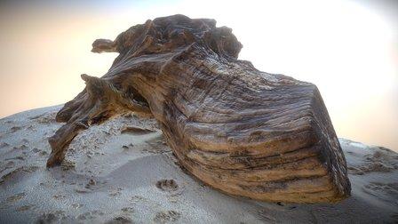 Beach Tree Stump 2 3D Model