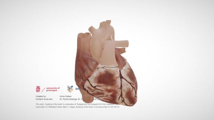 Cardiac Anatomy: external view 3D Model