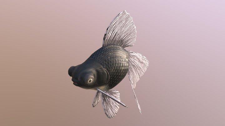 Broadtail Moor goldfish 3D Model