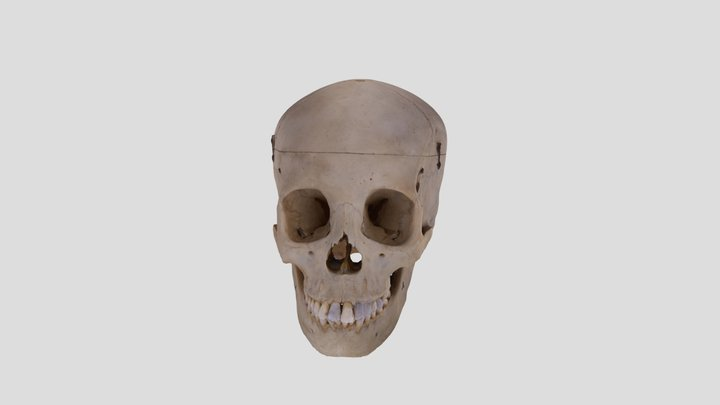 Human skull BB08 3D Model