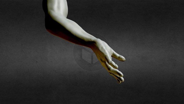 Arm & Hand sculpting 3D Model