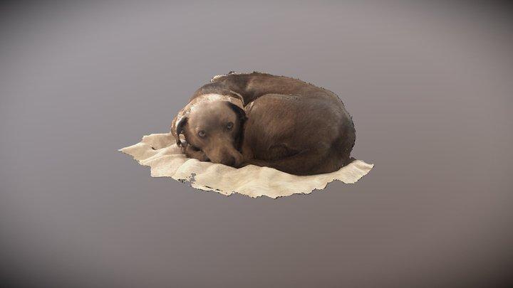 Let sleeping dogs lie 3D Model
