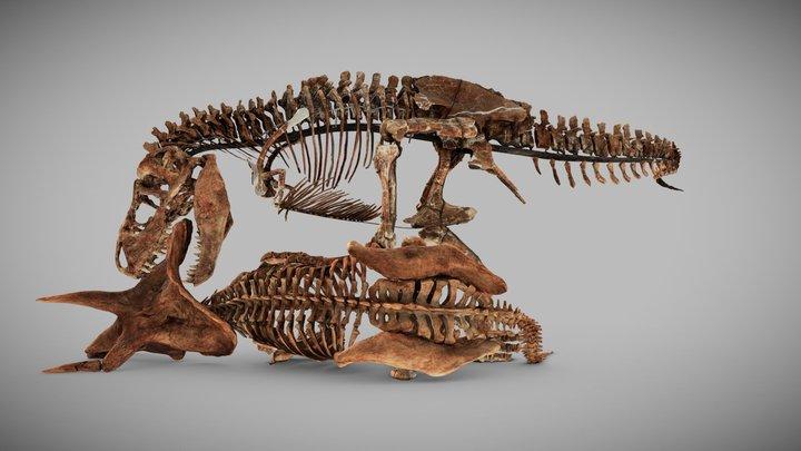 Tyrannosaurus Rex / Triceratops [SmithsonianDPO] 3D Model