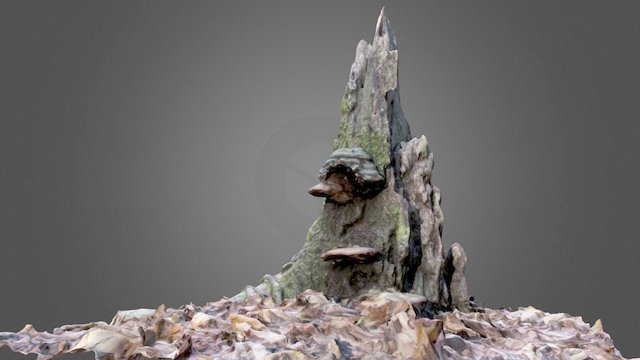 Stump with Shelf Fungus 3D Model