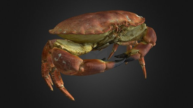Brown Crab, 3D Model
