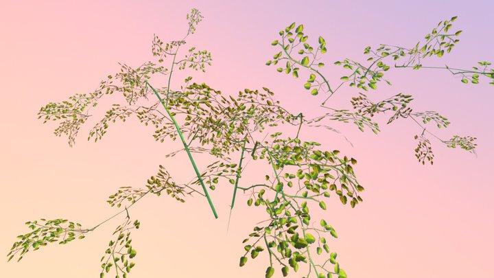 Greenbriar (Smilax rotundifolia) 3D Model