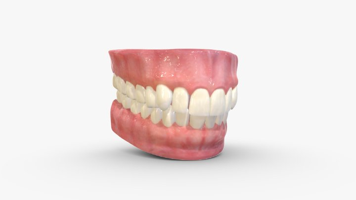 Realistic Teeth, Gums and Tongue - Type 01 3D Model