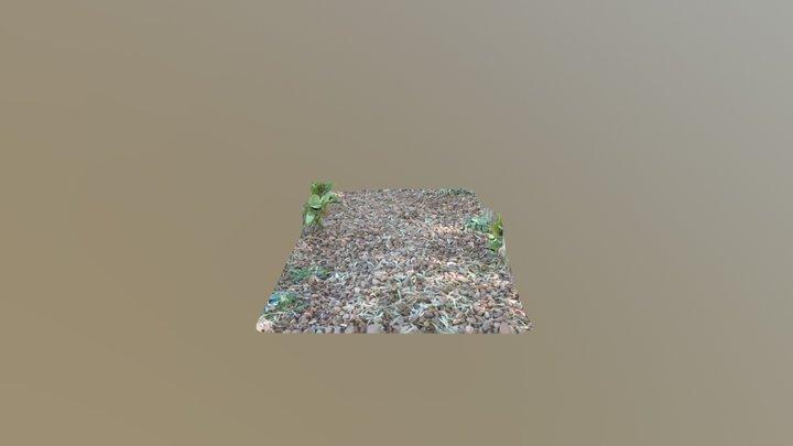 Gum eaves on Gravel 3D Model
