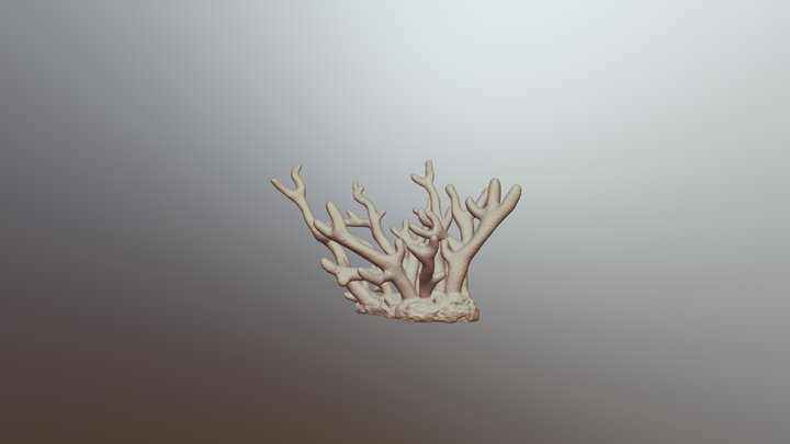 Staghorn coral 3D Model
