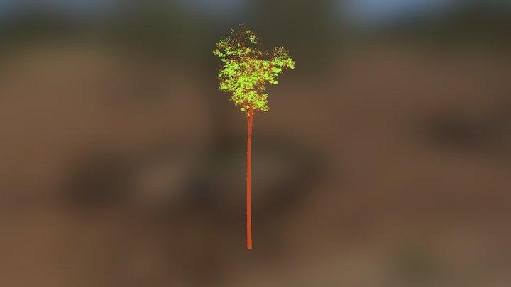 Amazon FACE tree 2 3D Model