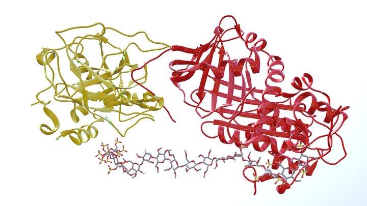 Antithrombin Thrombin Heparin Complex Ribbon 3D Model
